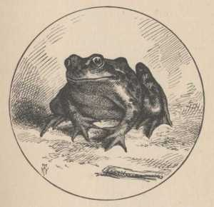 Mark Twain Jumping Frog Calaveras County Sketches