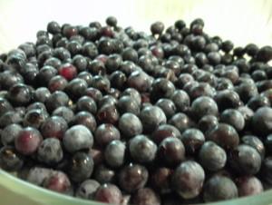 HABlueberries1